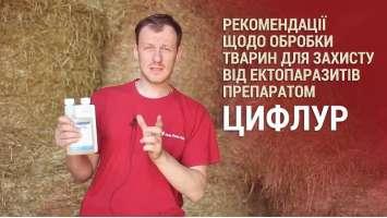 Рекомендації щодо обробки тварин для захисту від ектопаразитів препаратом Цифлур